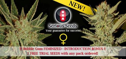 Serious Seeds Bubblegum Bubble gum